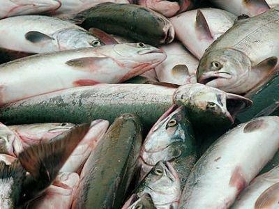 За сговор по норвежской рыбе ФАС назначила компаниям оборотные штрафы в 173,7 млн и 10,9 млн руб.