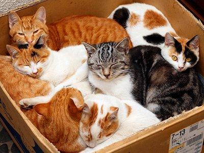 Прокуратура разлучает осужденных с кошками