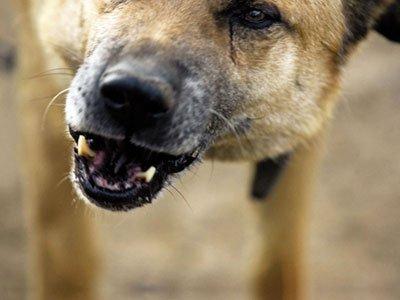 Жительнице Красноярского края выплатили 13 тыс. руб. заукус собаки