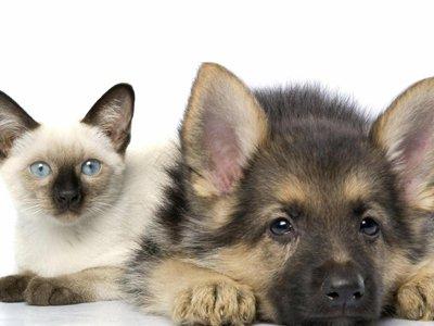 Израильский судья выступил за введение особого правового статуса для животных