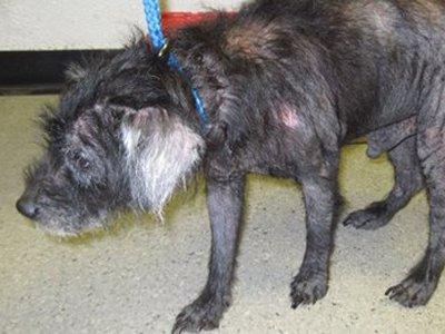 Правозащитники предложили создать инспекции приютов бездомных животных