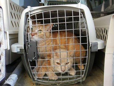 Британец получил 7,5 года тюрьмы за контрабанду героина в кошачьих клетках