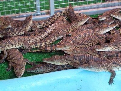На ВВЦ арестованы 134 крокодила, змеи, вараны и игуана