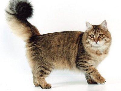 Областной суд постановил разлучить кошку с котятами