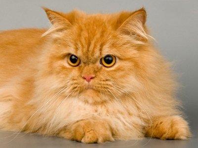 Судебный пристав, решив заставить должника вернуть долг, арестовал его кота