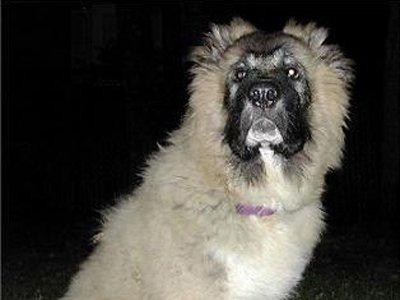Владелец пса, числившегося его единственным имуществом, заплатил долг после ареста своего любимца