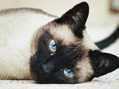 Британец получил 20 недель тюрьмы за покушение на жизнь соседской кошки