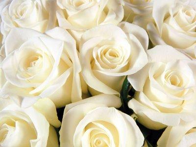 Суд пожалел влюбленного молодого человека, ограбившего для своей девушки цветочный ларек