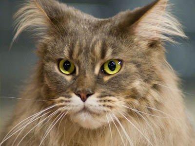 Владелица кота, умершего после кастрации, отсудила около 184000 руб.