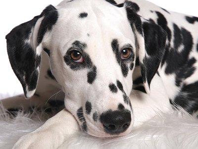 20-летний садист, пытавший пса-долматинца, получил реальный срок