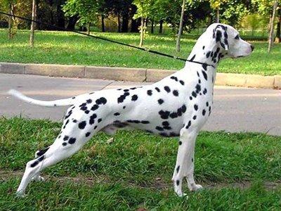 Госдуме предложили ввести налог на собак