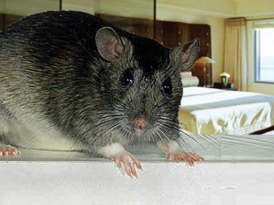 Турист, отдохнувший в отеле с крысами, засудил туроператора