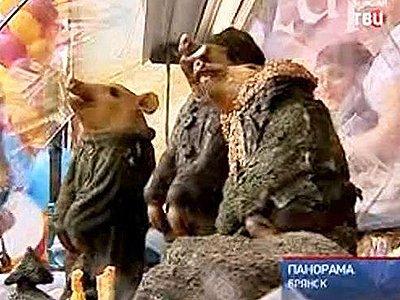 """Прокуратура """"жаждет крови"""" создателей экспозиции с поросятами, одетыми в партизанскую форму"""