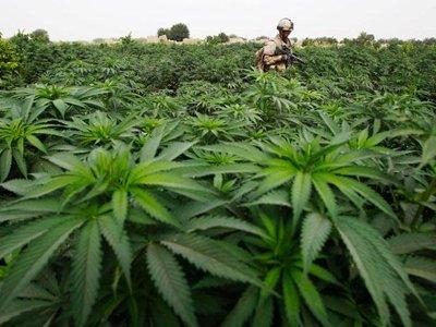 В Уругвае земли минобороны отдадут под плантации легальной марихуаны