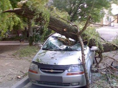 Томичка отсудил уполитеха 135 тыс. заупавшее наеемашину дерево
