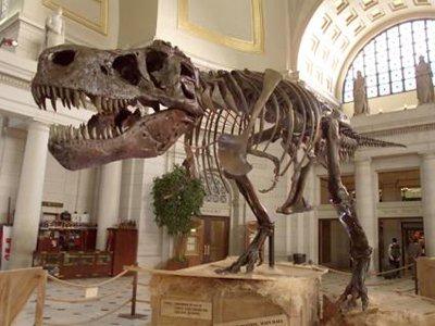 Палеонтолог из США получил три месяца тюрьмы за незаконный ввоз скелета тираннозавра