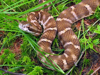 Пристав пресек попытку проникновения в суд ядовитой змеи