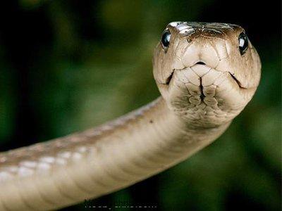 Судья из США, отправлявший по почте ядовитую змею, проведет 40 лет в тюрьме за наркотики