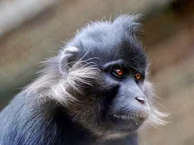 Владелец обезьяны мангобей, которая загрызла ребенка соседей, выплатит им 4 млн руб.