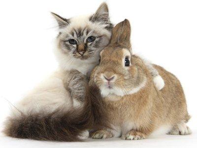 Пристав арестовал кота и кролика за долг по коммунальным платежам в 20000 руб.