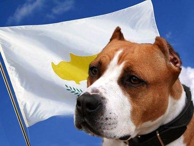 Суд Кипра впервые в истории страны вынес решение в пользу собаки
