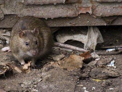 Апелляция исправила АСГМ, простивший столичному метрополитену крыс в системе вентиляции