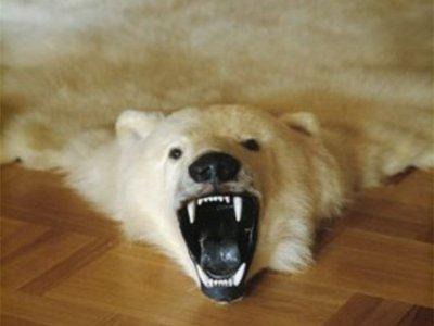 За покупку шкуры белого медведя и дикой кошки будет грозить до четырех лет лишения свободы