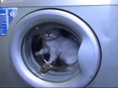 Прокуратура проверяет видео с котом, которого прокрутили в работающей стиральной машине