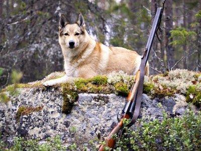 Охотник, чья лайка напала на 12-летнюю девочку, выплатит ей 100000 руб. компенсации