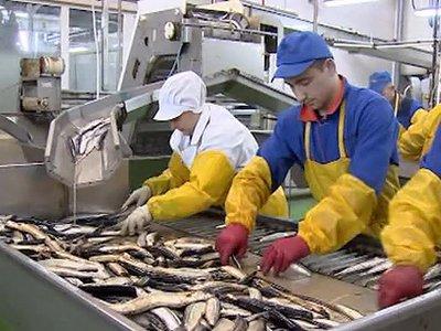 """Экс-директора рыбокомбината """"Островной"""" судят за невыплату зарплаты на 3 млн руб."""