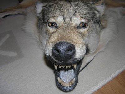 "УФАС возбудило дело по регистрации прав на бренд ""Тамбовский волк"""