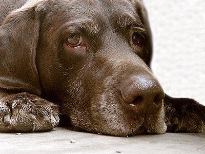 """Бразильские наркобароны """"заказали"""" убийство полицейской собаки"""
